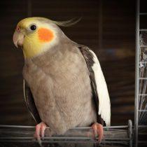 Fågel - ett fantastiskt husdjur